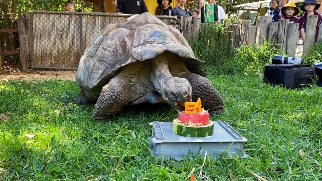 Tak wyglądały 54. urodziny żółwia. Był specjalny tort i inne smakołyki