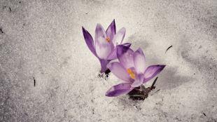 Pogoda na 5 dni: teraz jest pięknie, ale pierwszy dzień wiosny zapowiada się zimowo
