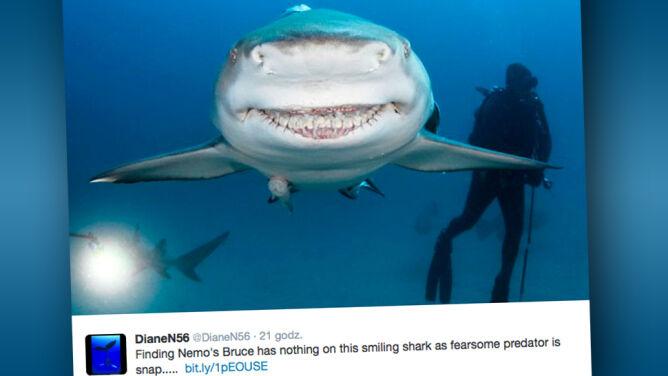 Uśmiech rekina - bezcenny!