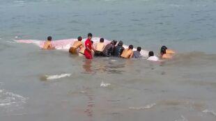 Ranny wieloryb utknął na plaży