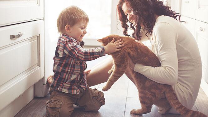 Koty powodują choroby psychiczne? <br />Brytyjczycy obalają mit