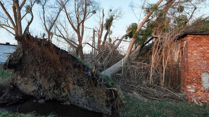Wiatr wyrywał drzewa z korzeniami. Jedna osoba zginęła, kilka jest rannych